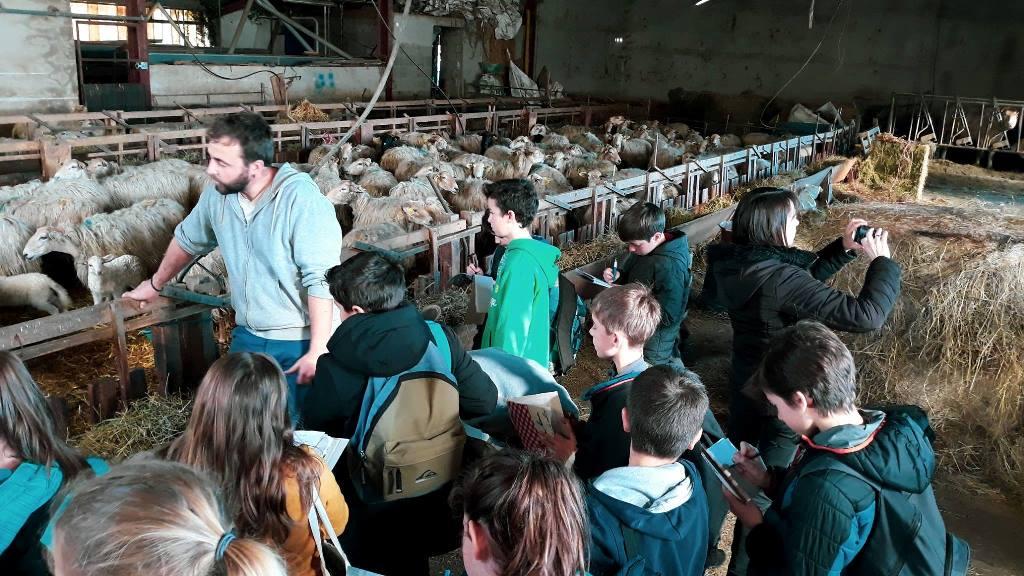 Visite de ferme à Itxassou